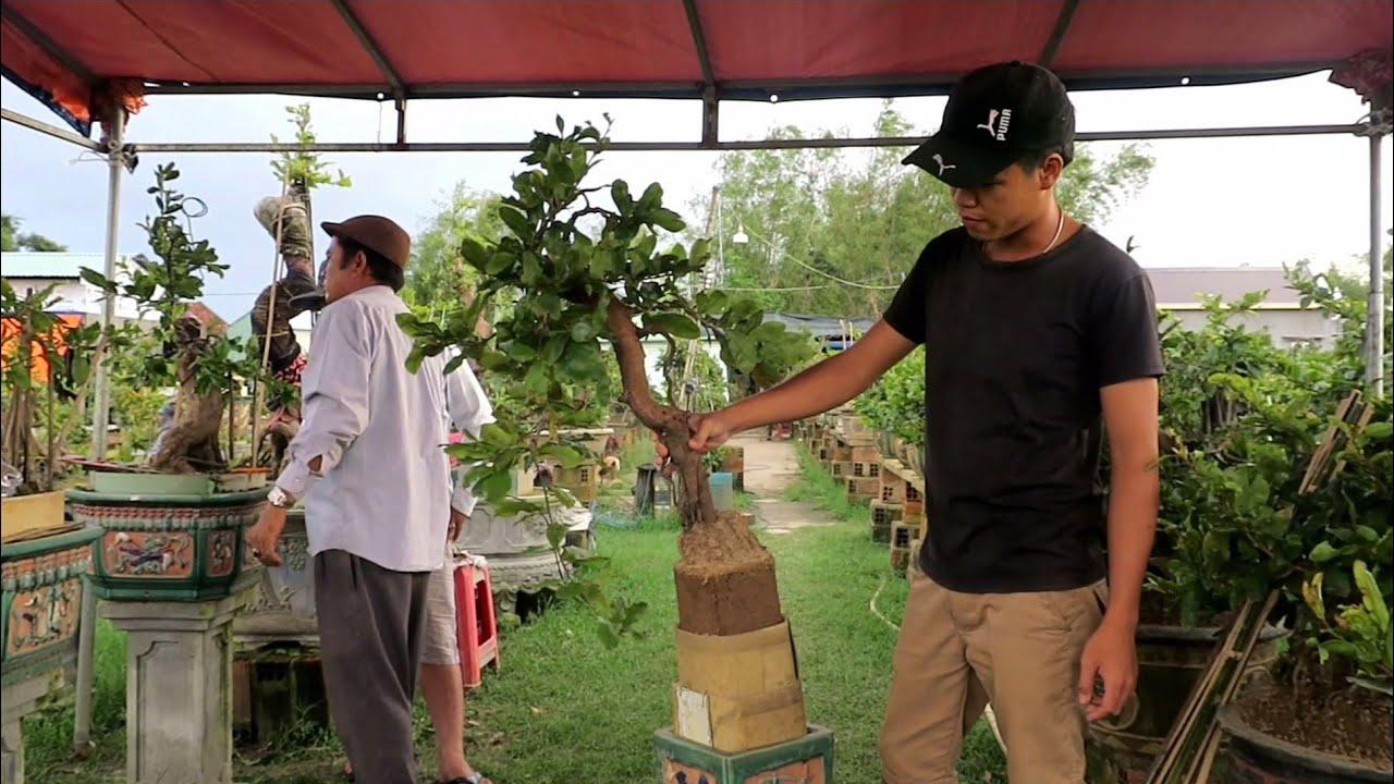 Nghệ thuật mai bonsai từ rễ mai độc lạ