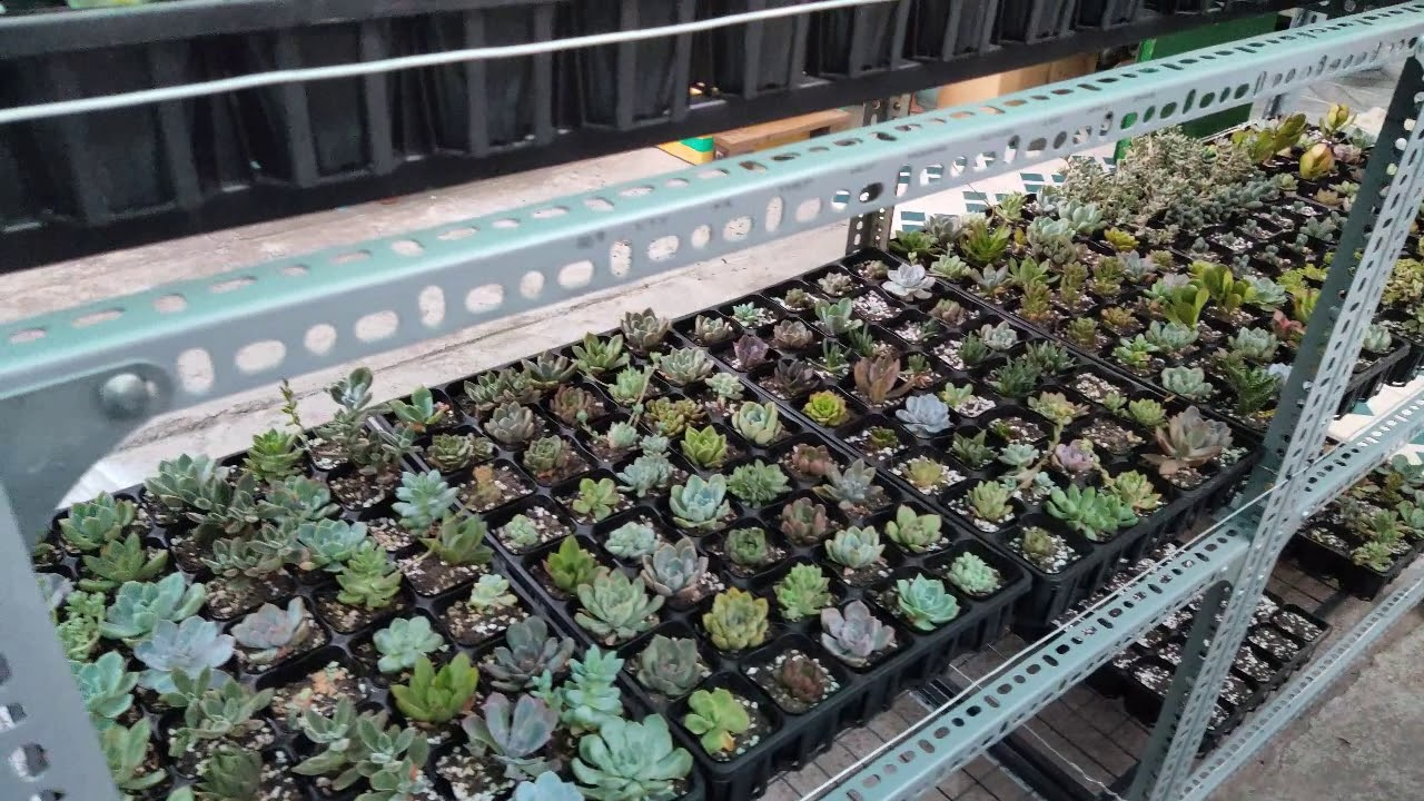 Nhà kính mini trồng sen đá _ Mini greenhouse for Succulents