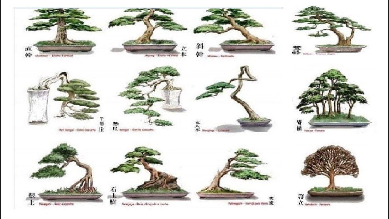 Những Dáng Thế Bonsai Cơ Bản Bạn Nhất Định Phải Biết   Bonsai styles   QH 01