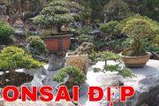 Những cây cảnh bonsai đẹp trong vườn sưu tập bonsai Bình Dương