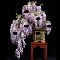 Những giáng cây cơ bản trong nghệ thuật bonsai   kênh cây cảnh