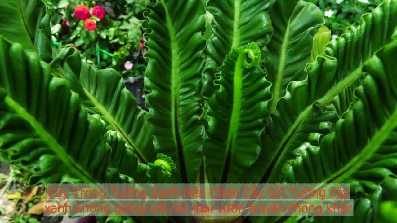Những loại cây trồng đẹp thường dùng làm tường xanh - Cùng làm vườn