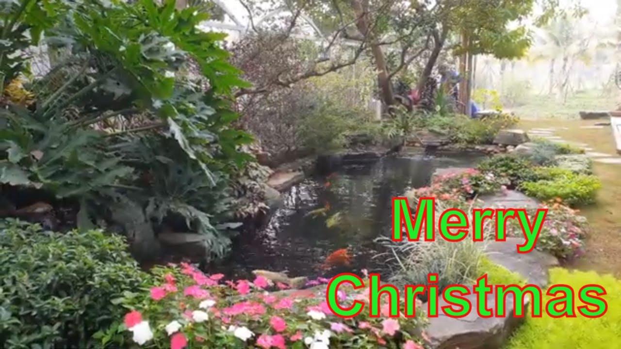 Noel 2019 bên Hồ cá Koi sân vườn Biệt thự đẹp Park River, Ecopark