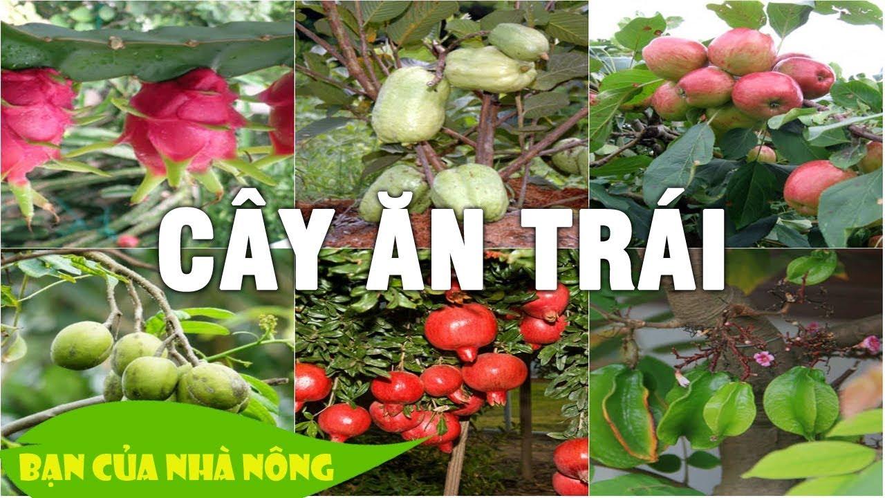 Phân hữu cơ sinh học cho cây ăn trái - Mô hình phát triển vườn cây lâu dài hiệu quả