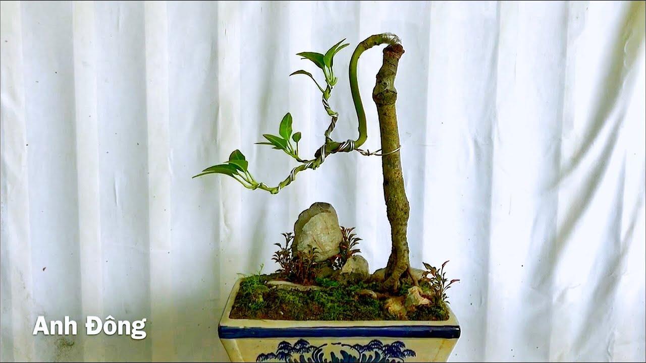 Phối đá tiểu cảnh cho cây bonsai