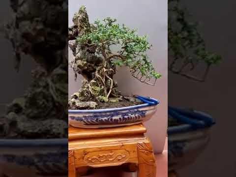 Phối cây cảnh cùng đá non bộ