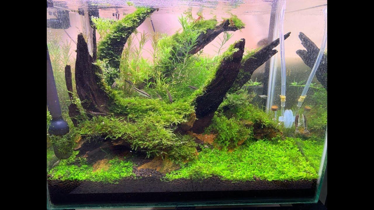 Quá Trình Setup Bể Thủy Sinh Phong cách Nature - Nature Style