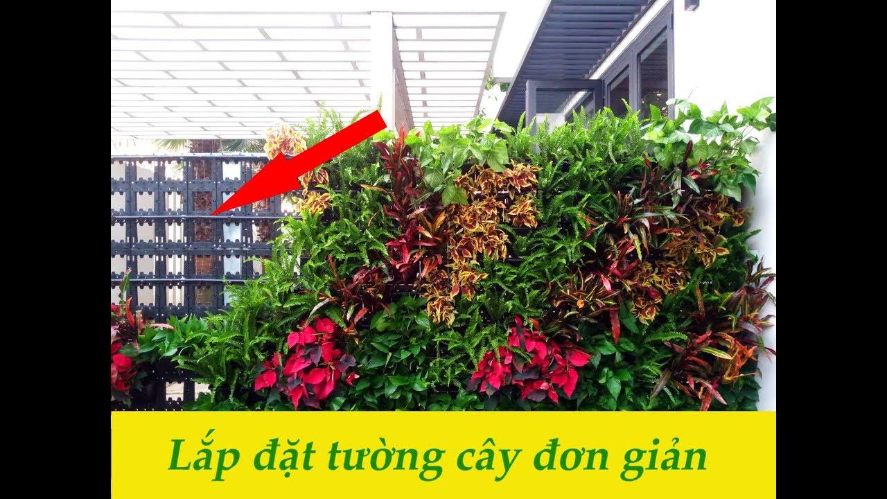 Quy trình lắp đặt tường cây xanh - NIS LANDSCAPE