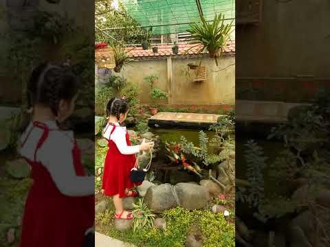 Sân vườn tiểu cảnh đẹp phong cách người nghèo