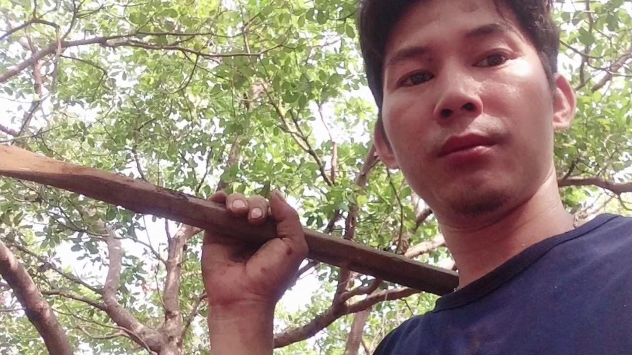 Săn gỗ lũa ghép thủy sinh ,ghép lan