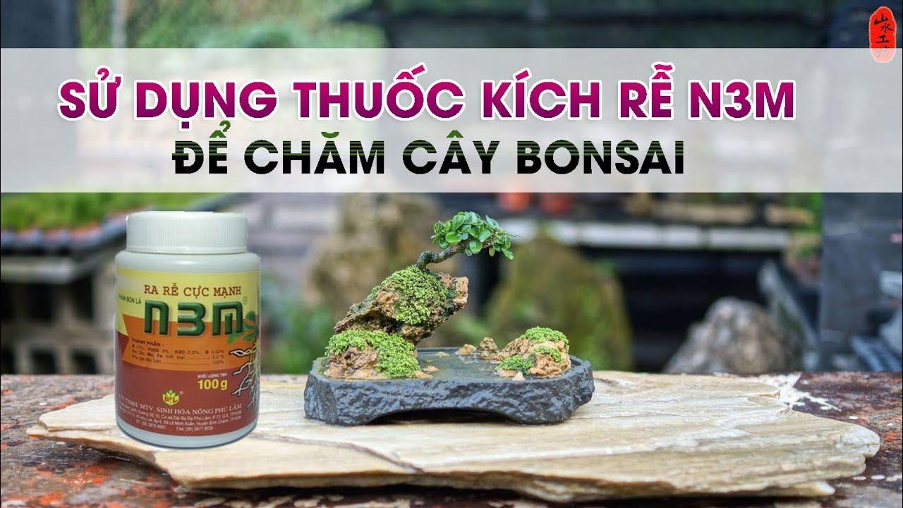 Sử dụng thuốc kích rễ N3M để chăm cây bonsai   Kinh nghiệm bản thân