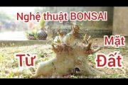 S43..Sung lùn lực.. Nghệ thuật bonsai từ mặt đất