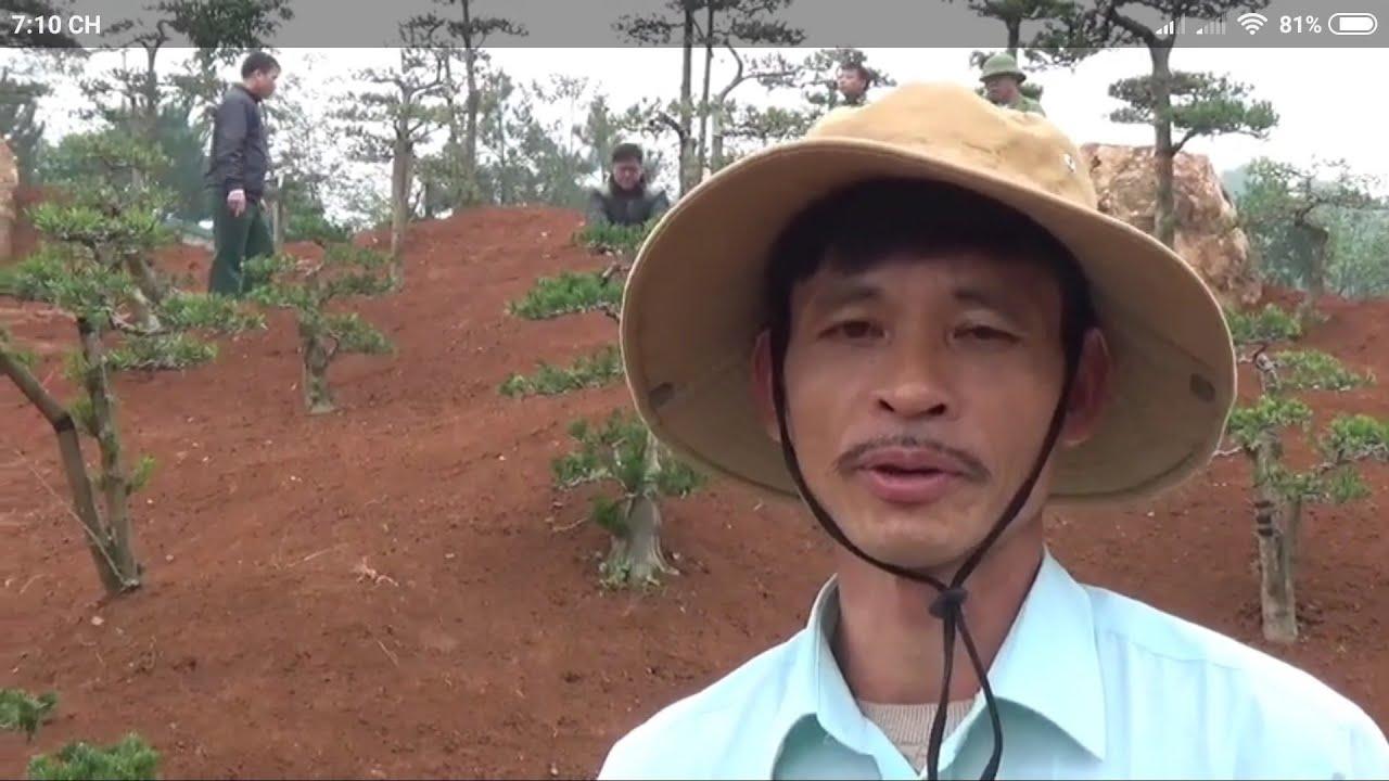 SH.2222.Bất ngờ gặp người chuyên sân vườn, tiểu cảnh non bộ,Bonsai đẹp Nguyễn Thủy,Ba Vì.Hà Nội
