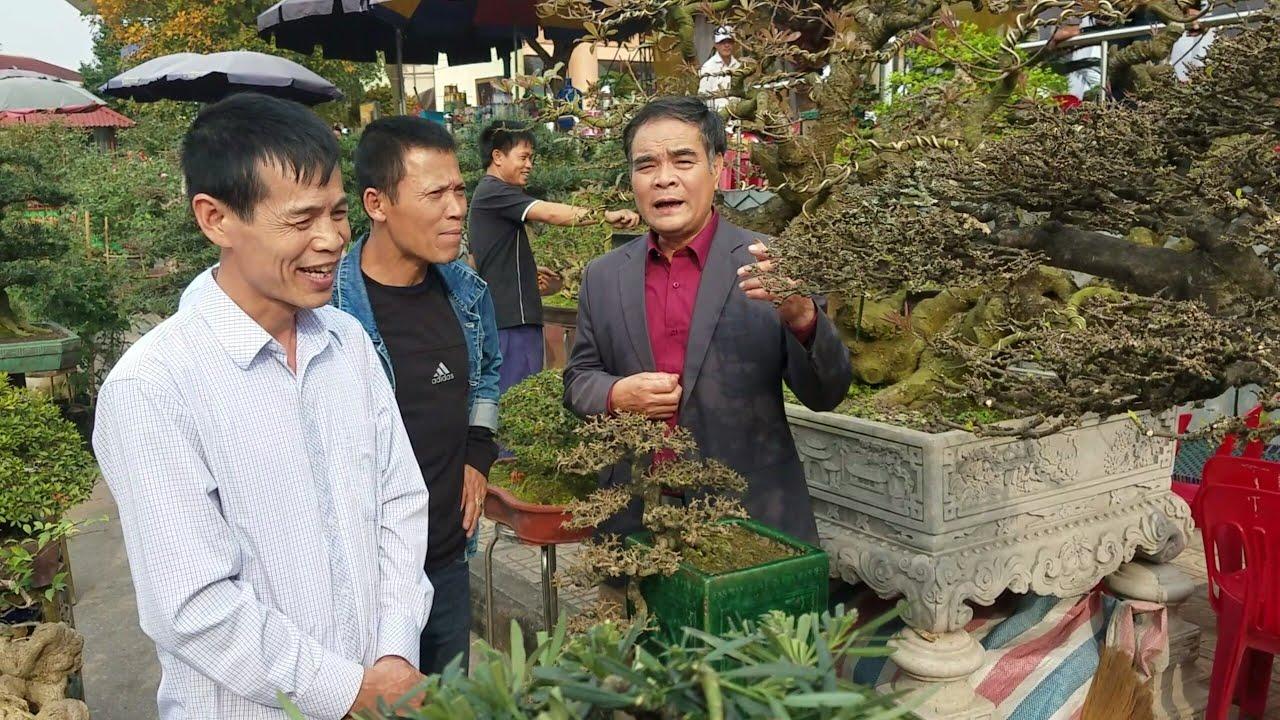 SH.2301.Báo giá 85tr cây Mai Chiếu Thủy cùng nhiều loại cây đẹp tại triển lãm Bắc Ninh.