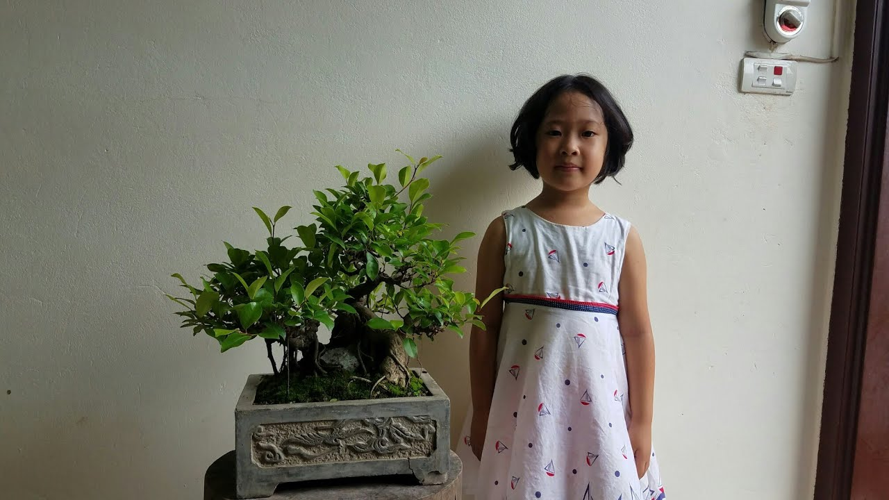 SH.2778.Thăm vườn cảnh Phong Lê Bonsai nghệ thuật mini giao lưu với các Bạn