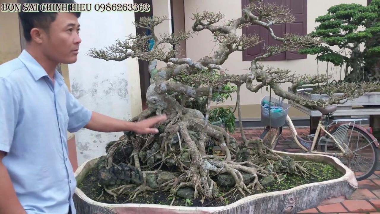 Sanh Nam Điền mi ni giá rẻ từ 50 ngàn đến 1 triệu số lượng lớn.