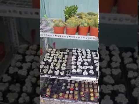 Sen Đá Giá Rẻ TPHCM/20k/CÂY/0794815459