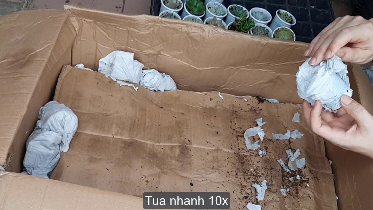 Sen đá chuyển từ nhà vườn Đà Lạt ra Hà Nội đóng gói như thế nào ?