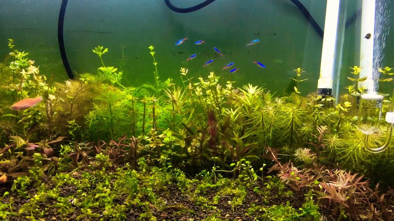 [Setup] Hồ thuỷ sinh phog cách hà lan.. cây quang hợp