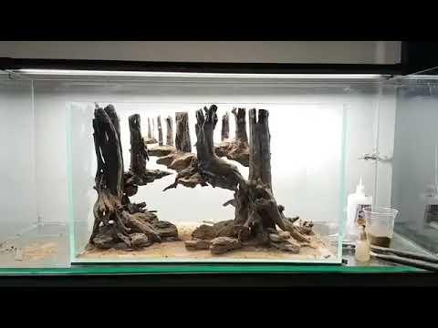 Setup bể bố cục bể thủy sinh gốc cây nổi