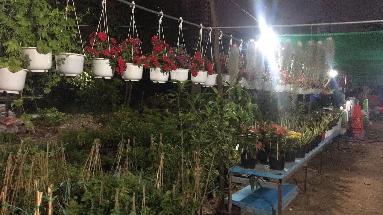 Shop hoa - cây văn phòng- vật tư nông nghiệp ở gần cuối đường Phạm Thế Hiển P.7, Q.8