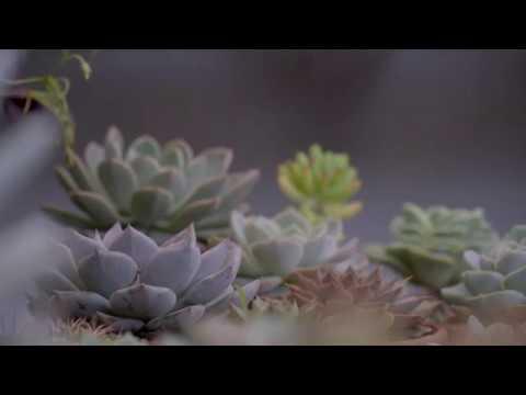 Succuclent collection Ep.2| Bộ sưu tập sen đá nho nhỏ của mình - Phần 2 | www.vuonsenda.vn