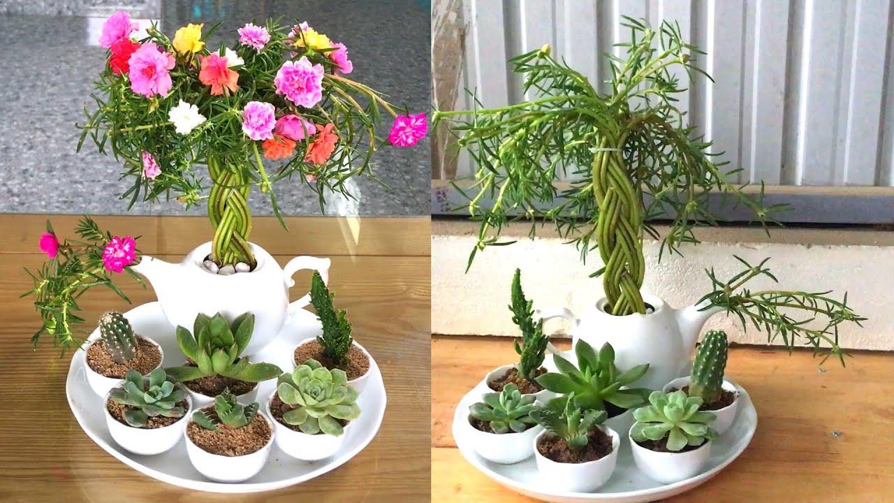 Tái chế bộ bình ly bị bể nắp để trồng hoa mười giờ và sen đá