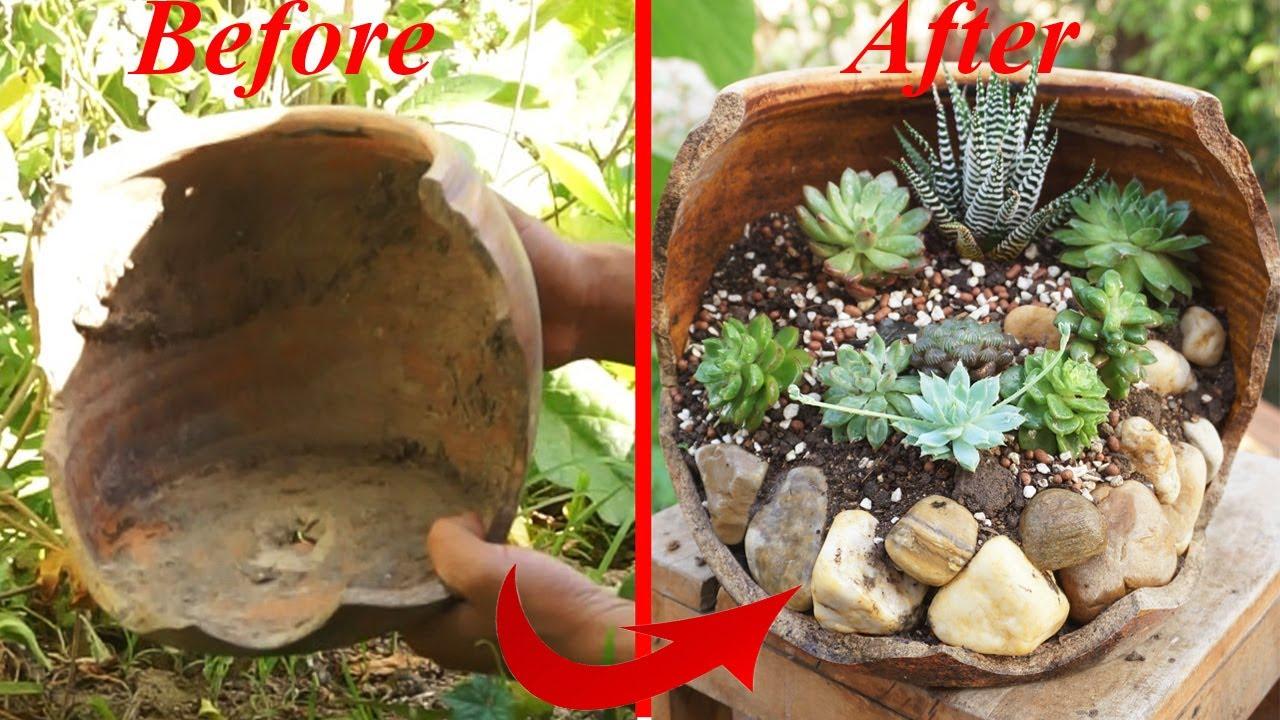 Tái chế chậu vỡ để trồng sen đá theo cách của Garden | Recycle broken pots to plant stone lotus