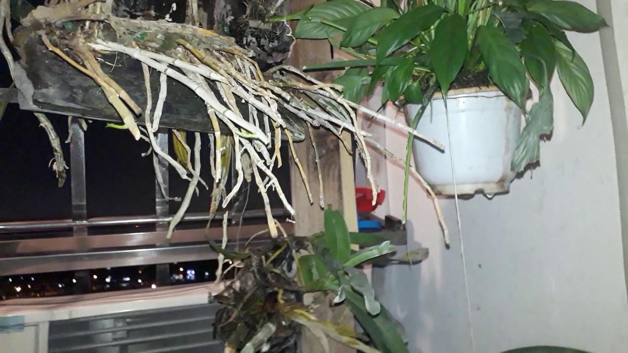 Tưới bán tự động từ vòi nước máy cho cây cảnh và bể cá thủy sinh cả năm không phải dùng sủi điện