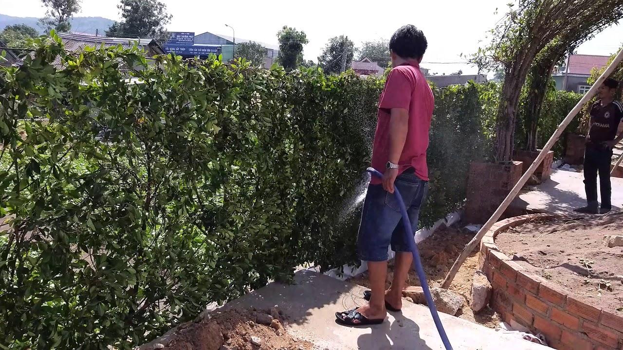 Tường rào cây xanh.... Tel 0966703075