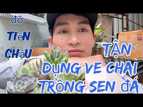 Tận dụng đồ bỏ đi trồng cây   sen đá giá rẻ   Anh Tuấn