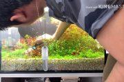 Tỉa Cây Cho Hồ thủy Sinh Hà Lan Sau 1 Tuần Tuổi - Plants trim