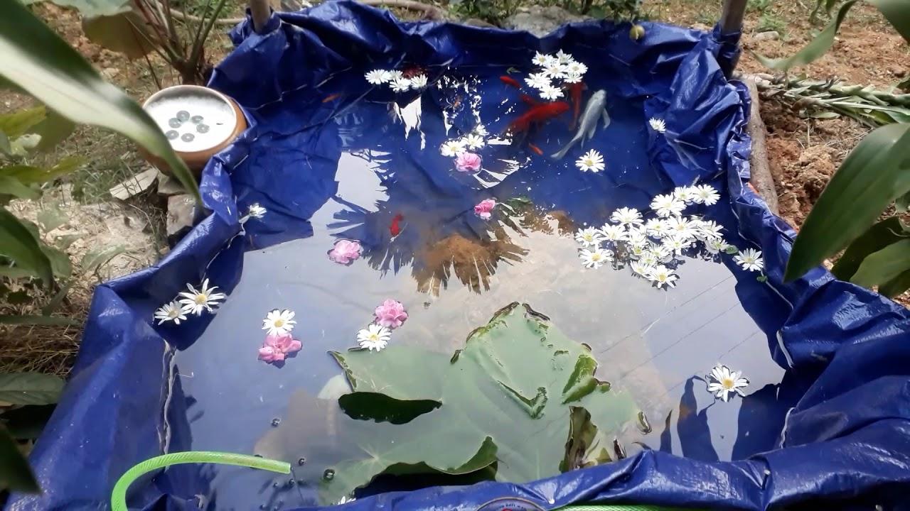 Tự làm bể cá cảnh ở sân vườn và tưới nước tự động cho vườn cây chỉ với 200k