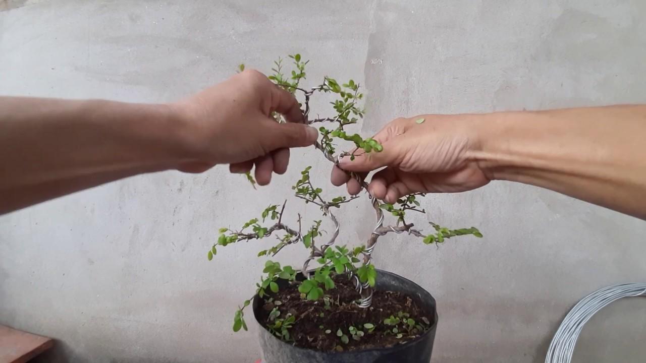 Tự làm bonsai mini theo phong cách tự nhiên