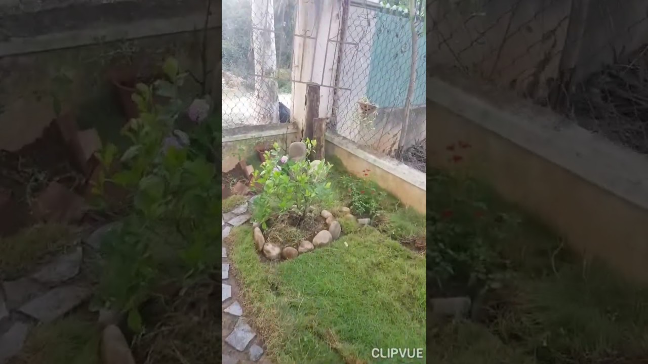 Tự tạo cảnh sân vườn mini tại nhà