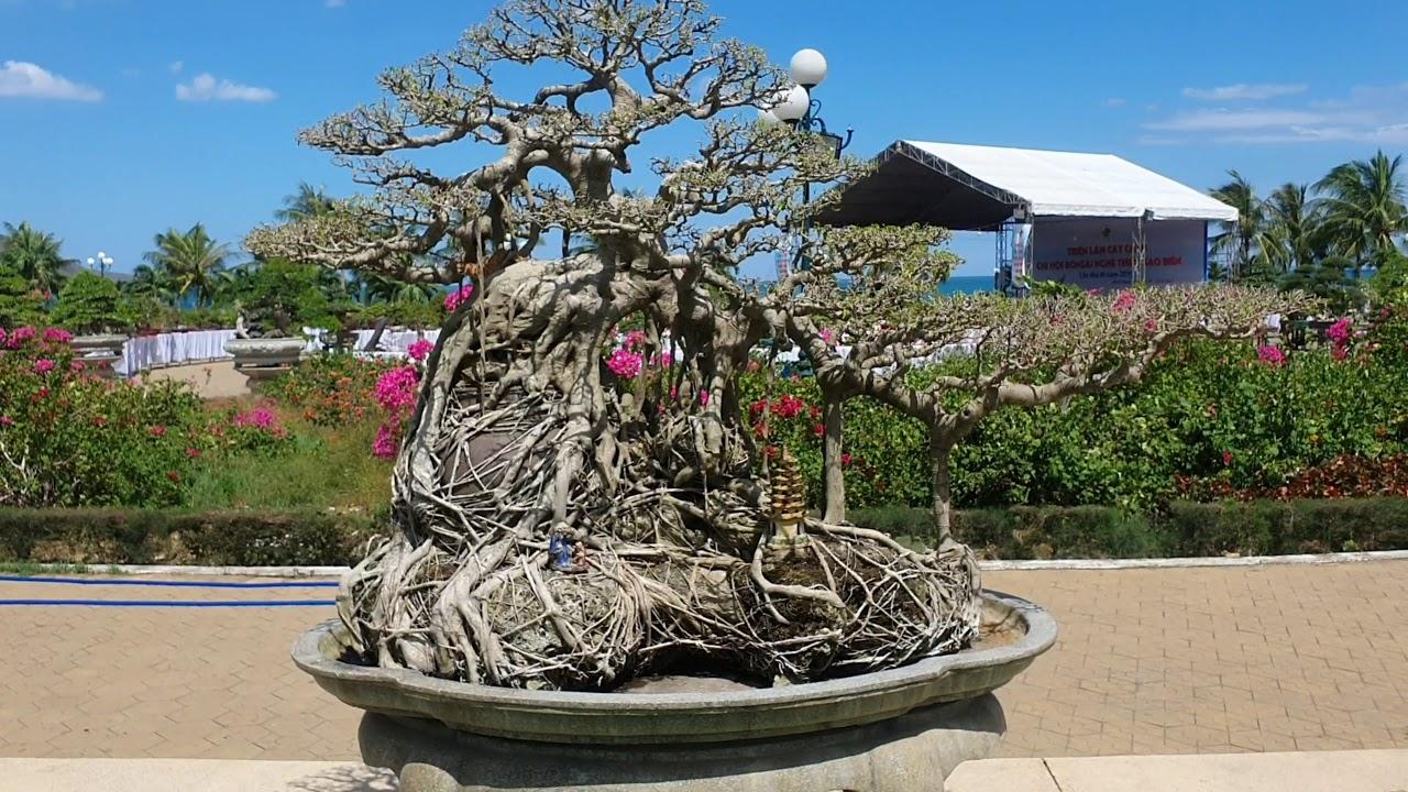 TXT #6 TRIỂN LÃM CÂY CẢNH. NGHỆ THUẬT BONSAI TẠI QUY NHƠN TẬP 6- EXHIBITION OF BONSAI TREES.