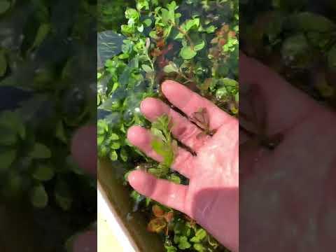 Thùng Xốp Thuỷ Sinh mini - gỡ lưới che nắng màu cây rực hơn