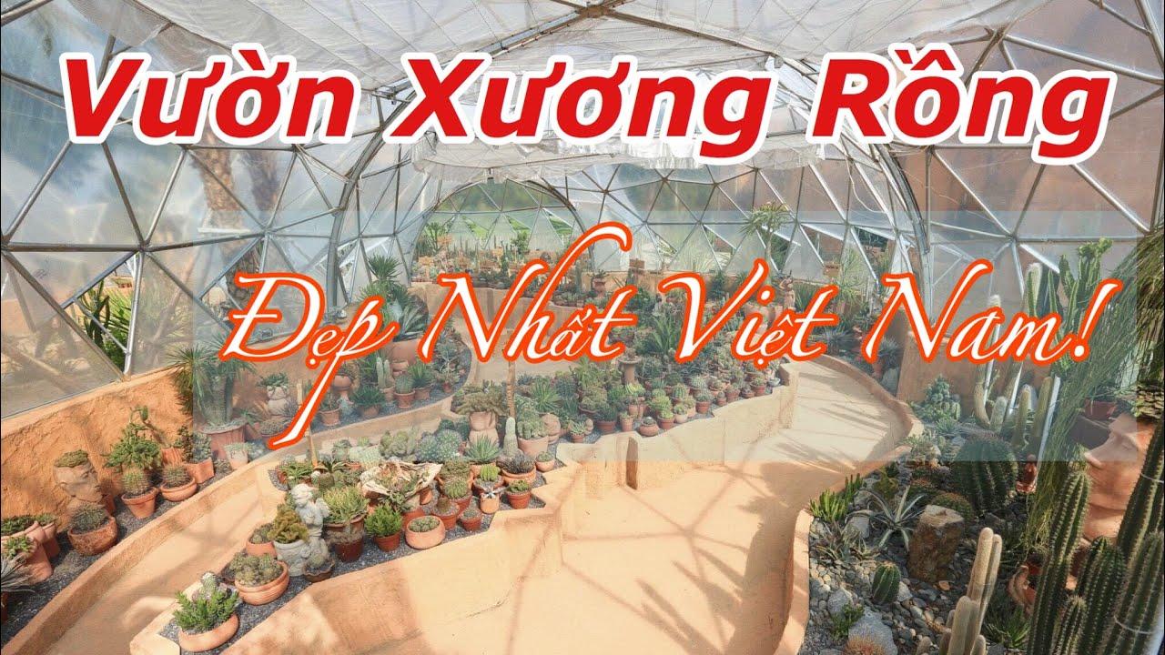 ?? Thăm Quan Vườn Xương Rồng Đẹp Nhất Việt Nam tại VinWonders Nha Trang