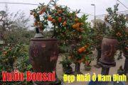 Thăm Vườn Cây Bonsai Đẹp Nhất Ở Nam Định