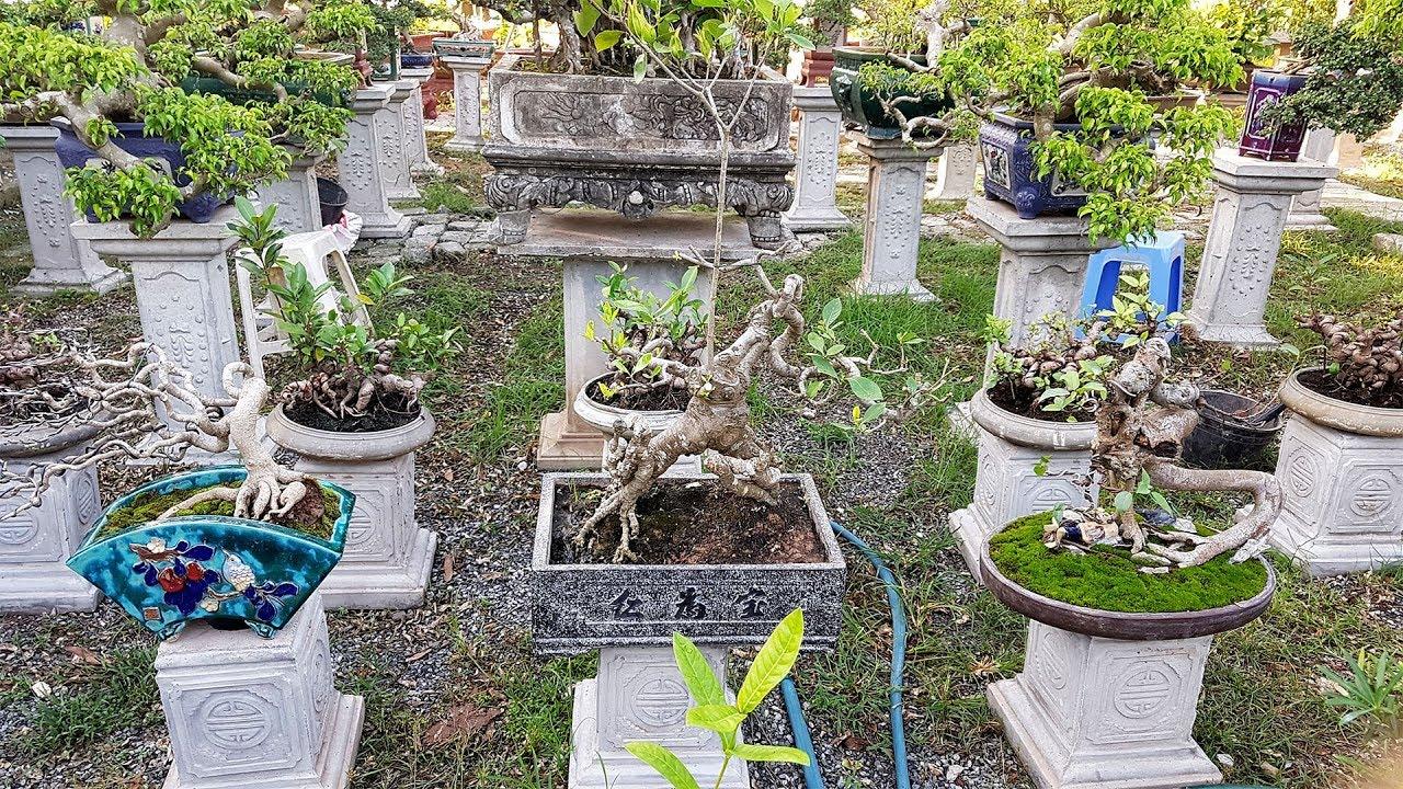 Thăm vườn cây cảnh bonsai nghệ thuật của anh Nguyên Hải Phòng