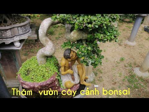 Thăm vườn cây cảnh bosai mini nhà em rể..