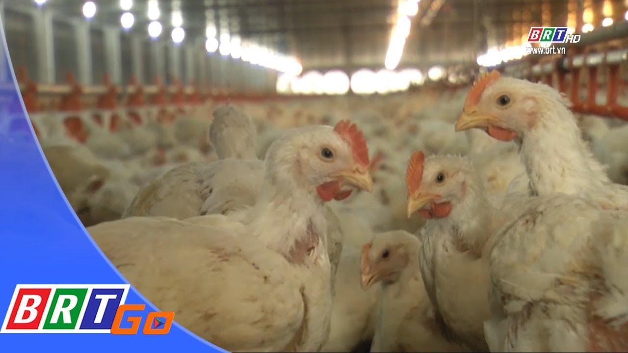 Thị xã Phú Mỹ phát triển mô hình chăn nuôi ứng dụng công nghệ cao | BRTgo