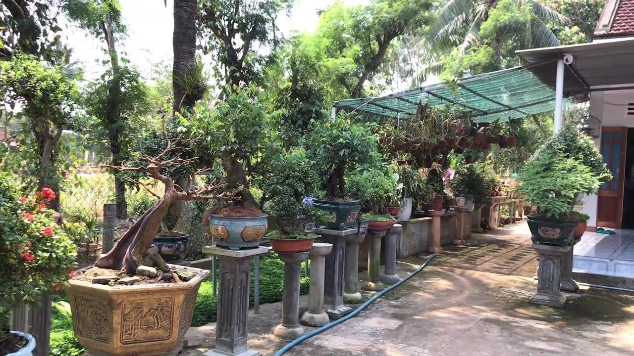 Tham quan vườn cây cảnh chú Lâm gần nhà, nhiều tác phẩm bonsaimini đẹp