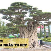 Thanh Hóa: Sửng sốt bộ sưu tập cây tiền tỷ