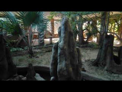 Thiết kế Bể Cá kết hợp tiểu cảnh Đẹp cho sân vườn