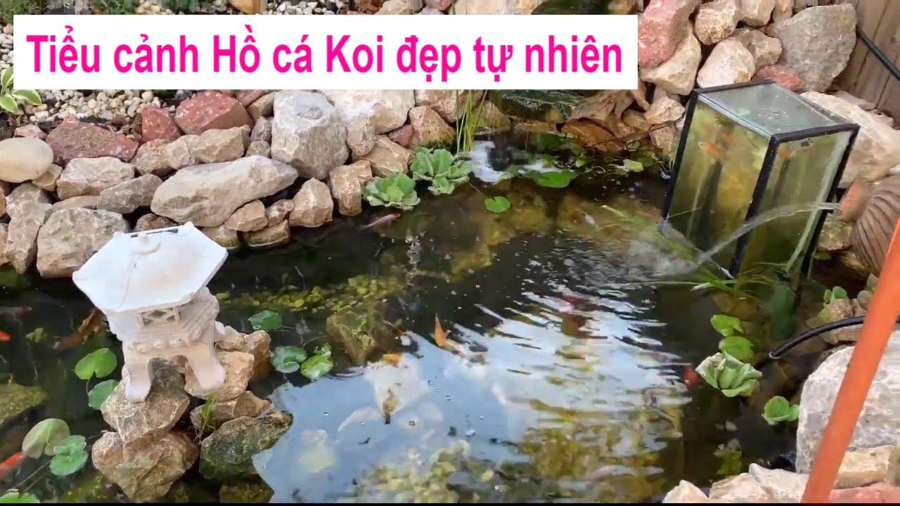 Tiểu cảnh hồ cá koi Nhật mini đẹp tự nhiên