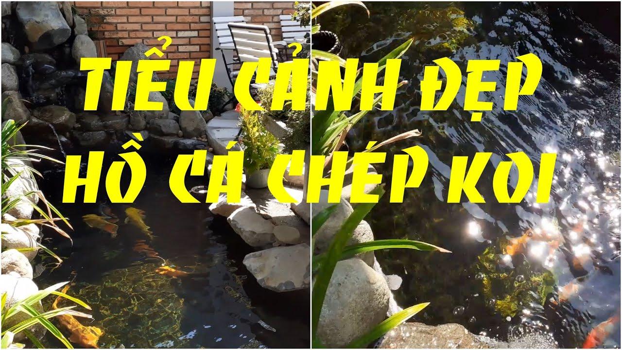 Tiểu cảnh đẹp hồ cá Koi sân vườn | Small landscape beautiful garden Koi aquarium