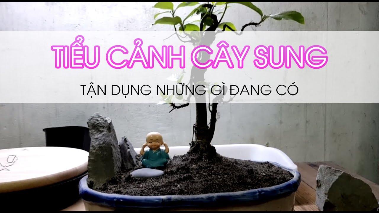 Tiểu cảnh cây sung - Tiểu cảnh có gì dùng đó   Cây Sung bonsai bên đường ray ngày nào lên chậu