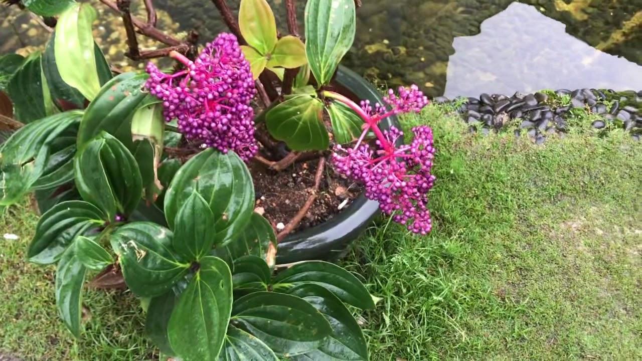Tiểu cảnh sân vườn đẹp hút hồn Nhà anh 7 đại gia trên Đà Lạt