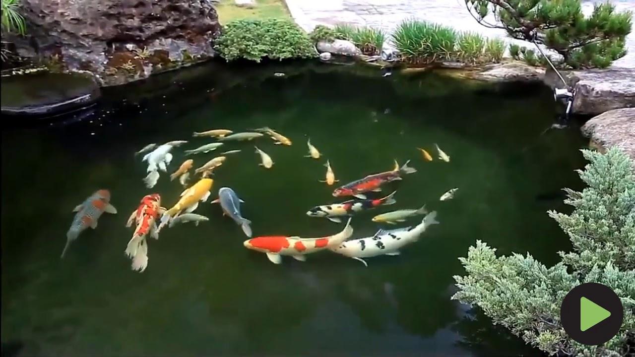Tiểu cảnh sân vườn đẹp hồ cá koi 2019